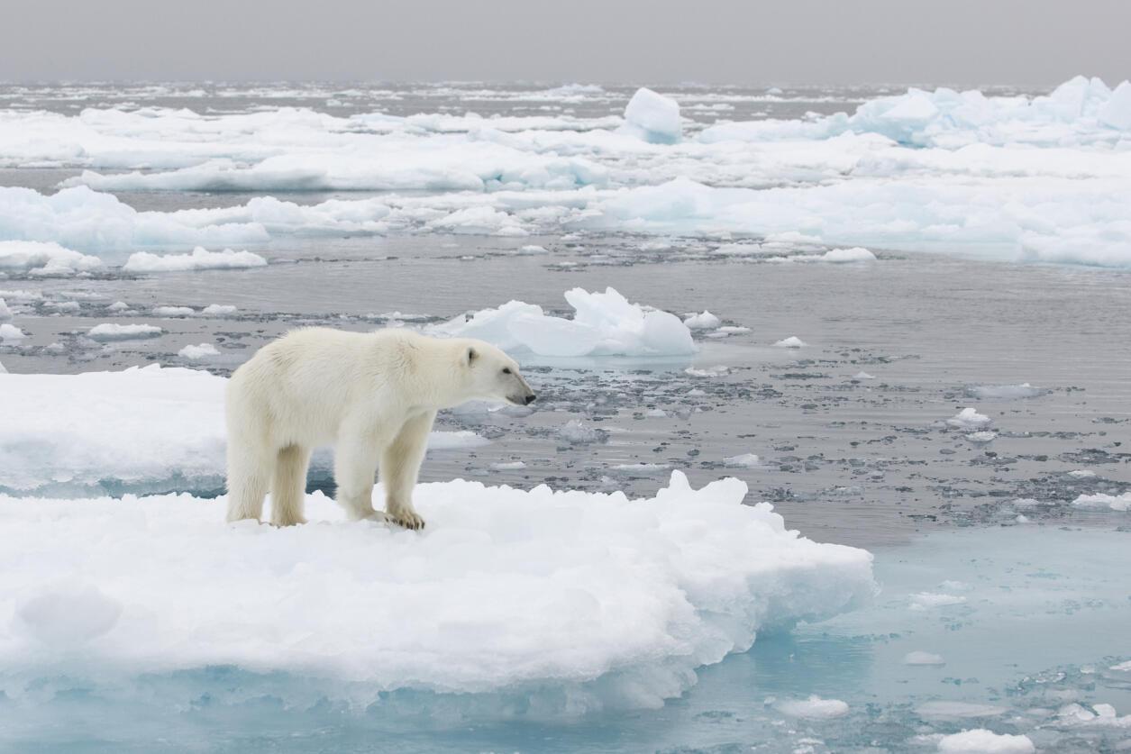 En 2016, la banquise s'est fortement réduite, le niveau de la mer a continué à augmenter et les océans à se réchauffer.