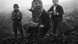 Garçons lors du travail aux champs. Foyer d'Oberbipp, canton de Berne, 1940.