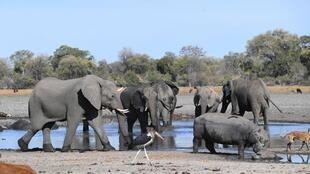 Elephants in the Okavango Delta in Botswana where hundreds of pachyderms were found dead.