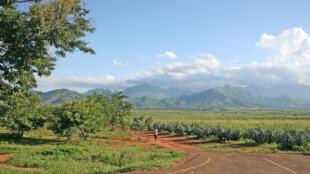 A plantation in the outskirts of Morogoro, Tanzania.
