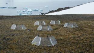 Cámaras para medir los efectos del calentamiento ambiental sobre plantas antárticas