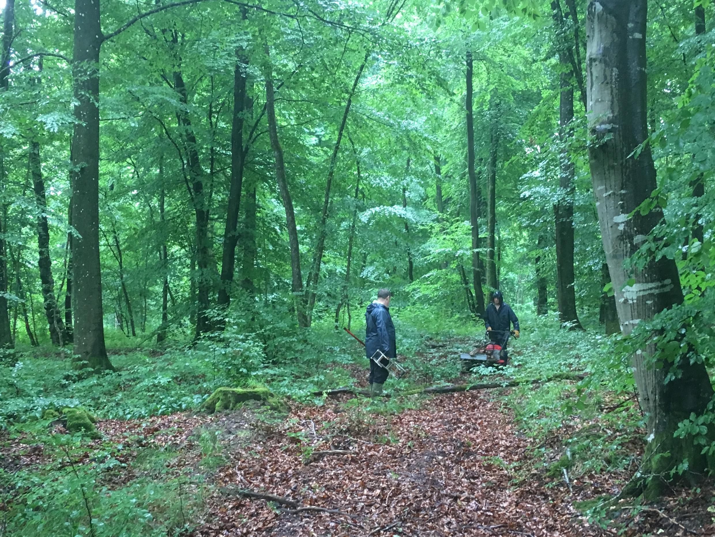 一戰中的戰場一角——凡爾登森林。