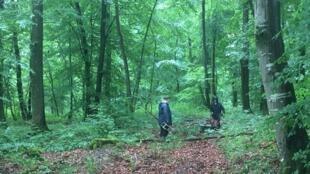一战中的战场一角——凡尔登森林。