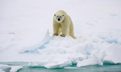 Urso polar em seu habitat natural, no Ártico, em imagem de 2009.