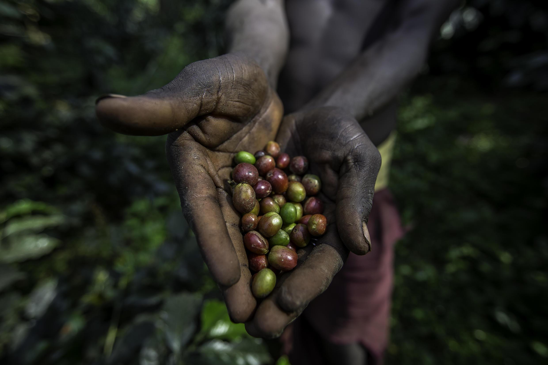 cafe-travailleur-ethiopie