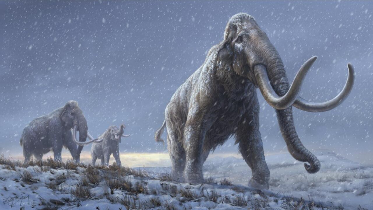 Le plus vieil ADN du monde séquencé sur un mammouth enfoui dans le permafrost - RFI