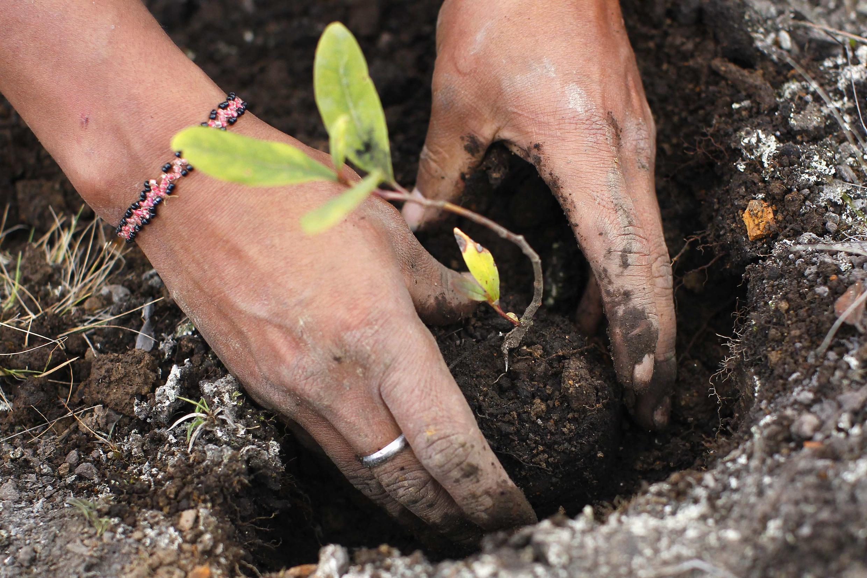 Un ouvrier plante des semis pour la reforestation à la station biologique Huayquecha près de Paucartambo, au Pérou.