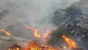 آتشسوزی در سال جاری، هزاران هکتار از جنگلها و مراتع ایران را نابود کرد.