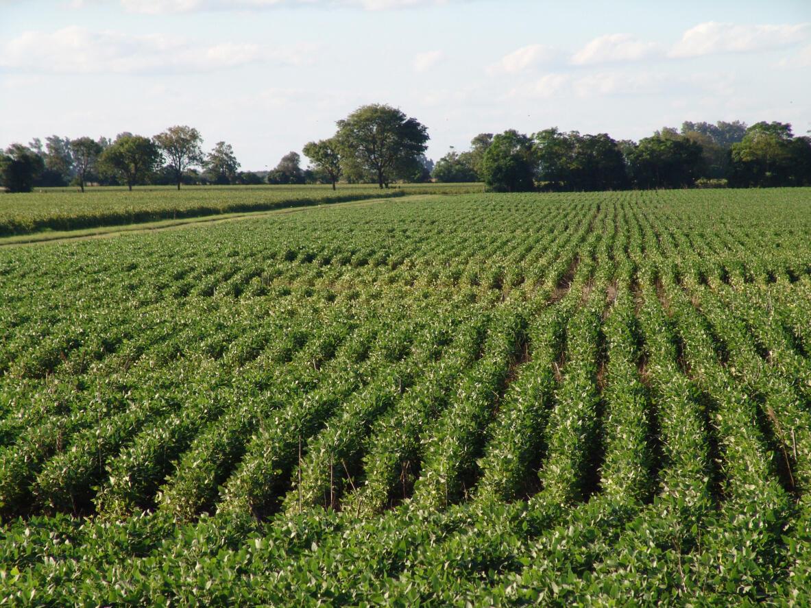 Un champ de soja près de Santa Fe, en Argentine (image d'illustration).