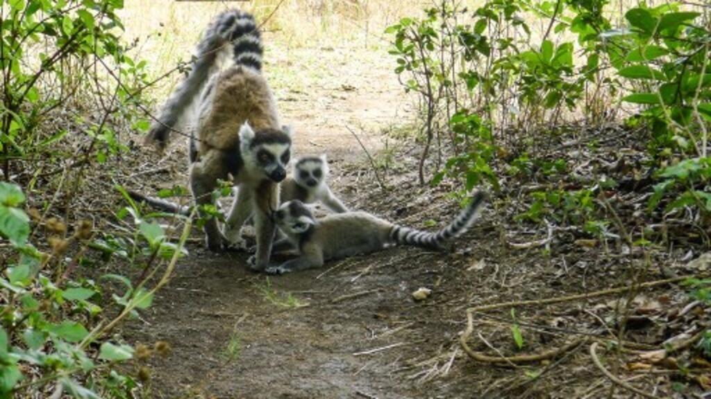 Madagascar: le changement climatique menace dangereusement les aires protégées
