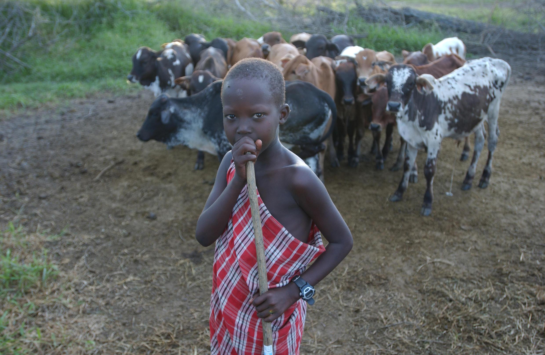 La ganadería es una de las actividades donde se da el trabajo infantil.