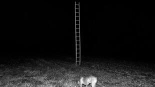 """Fotografia da série """"A Casa das Sete Senhoras"""" de Tito Mouraz."""