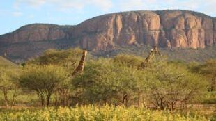 Dans la réserve du Marataba: depuis le début de l'épidémie, ces 23000 hectares sont totalement fermés au public.