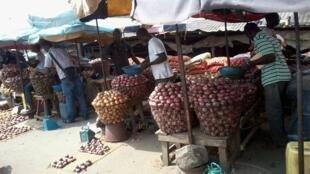 Ana noman Albasa sosai a Nijar