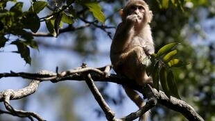 Le WWF alerte sur le déclin spectaculaire de la population mondiale de vertébrés sauvages