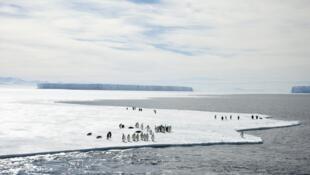 Pinguins no Mar de Ross, onde será criada a maior reserva marinha do mundo