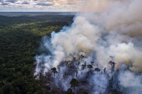 Segundo o Instituto Nacional de Pesquisas Espaciais (Inpe), 9.212 km2 de vegetação foram destruídos entre agosto de 2019 e julho de 2020, um número que mostra um aumento de 34,5% do desmatamento no local.