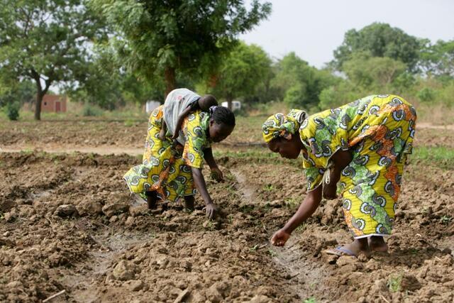 Le potager des femmes du groupement  Nabonswendé
