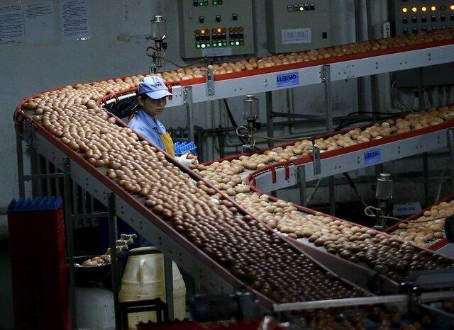 北京附近一座農場的雞蛋包裝流水線