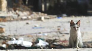 敘利亞內戰不斷戰火後的廢墟。