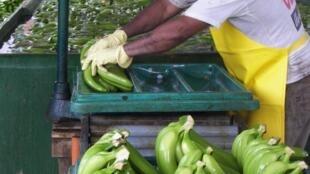 76 % des bananes consommées en Europe sont latino-américaines et l'origine Equateur arrive largement en tête.