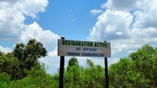 Madagascar, site d'Ampitambe, terrain en reboisement