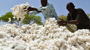 Les travailleurs burkinabés emballent le coton le 3 mars 2017 à Boromo, dans le centre du Burkina Faso.