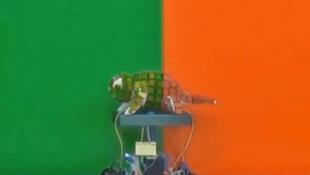 Des chercheurs chinois de l'université de Wuhan ont mis au point un robot caméléon capable de changer de couleur en fonction de son environnement.