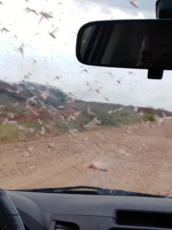 Driving through a swarm of locusts near the Kenyan border in Ethiopia, January 2020