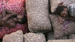 Indian workers sleep on onion sacks at a wholesale market