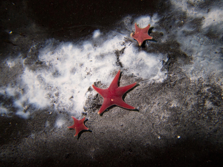 В море Росса обнаружили белые пятна, указывающие на присутствие микробов, питающихся метаном. Фото от 2016 года
