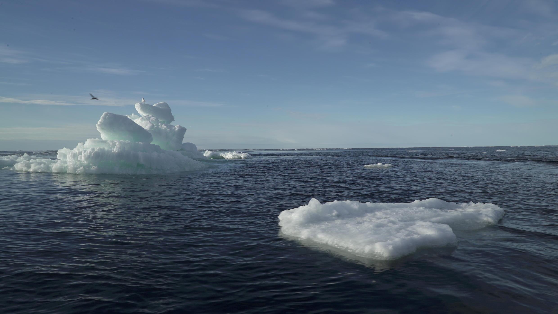 Curin kankarar dake narkewa akan tekun Arctic. 14/9/2020.