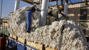 Au Burkina Faso, plus de 90% de la fibre de coton produite est destinée à l'export vers l'Asie et l'Europe. Le reste est transformé localement pour la production de fil,  en majorité réexporté dans la sous-région  par  la principale filature de coton local