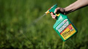 Wata mata na amfani maganin Roudup na kamfanin Monsanto wajen kashe kwarin da ke cinye amfanin gona