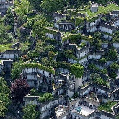 """一個叫綠色樓頂的(Toit tout vert )發明小組參與巴黎大型""""樓頂菜園""""計畫"""
