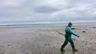 Une pécheuse à pied sur la plage de Saint-Pierre-Quiberon dans le Morbihan.