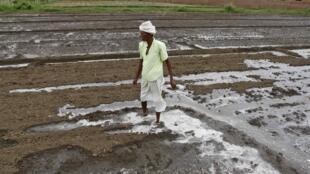 Un agriculteur dans l'Etat indien de Gujarat frappé par la sécheresse en 2012.