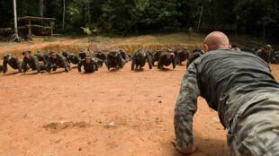 Des militaires français font des pompes en Guyane.