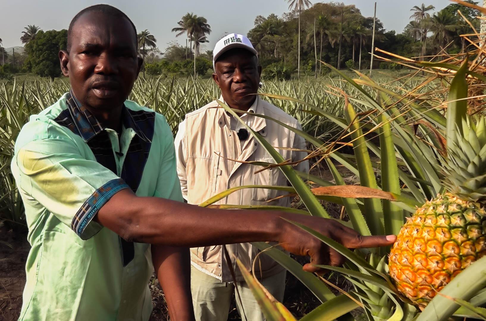 Guinée - Ananas - Baronne de Guinée - photo ananas7