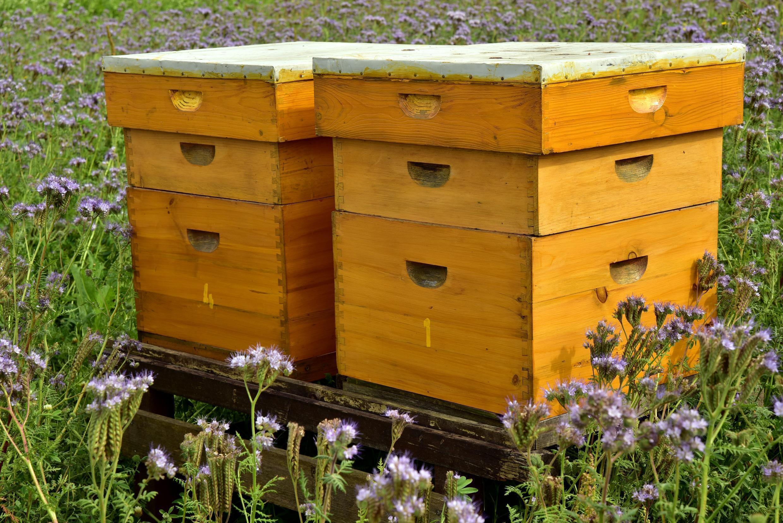 Abeilles - Ruches - beehive-3703434