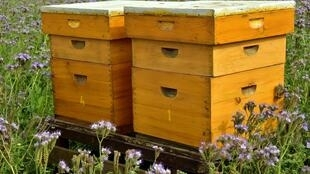 Abeilles - Ruches - beehive-3703434
