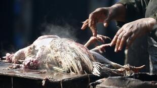 សត្វមាន់  រឺសត្វបក្សីផ្សេងទៀត ជាប្រភពចម្លងមេរោគ ផ្តាសាយបក្សី H5N1 និង H7N9