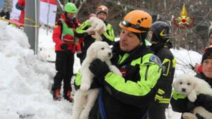 Três filhotes foram resgatados nesta segunda-feira (23) nos escombros do Hotel Rigopiano, em Farindola, no centro da Itália