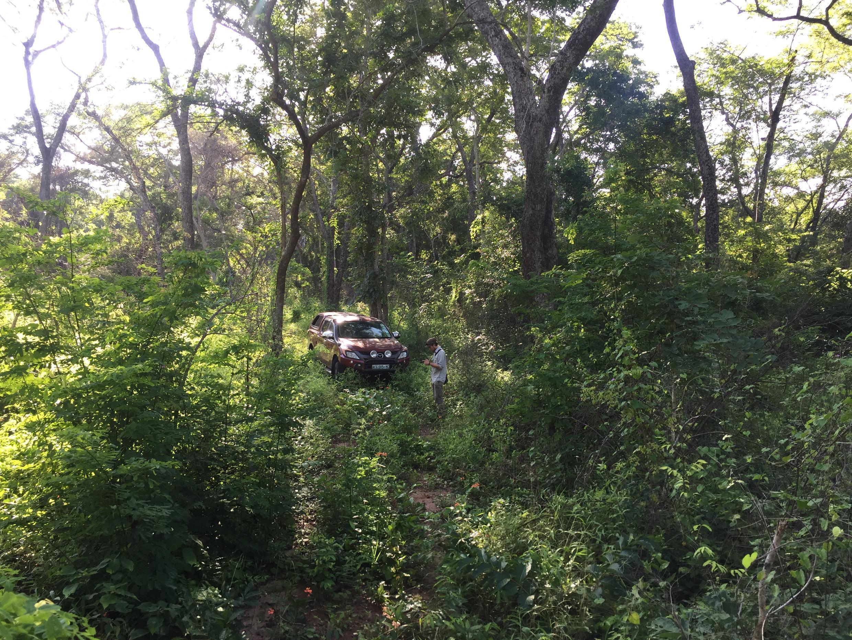 Dans la réserve naturelle de Gilé, dans le nord du Mozambique, la végétation est si dense, que la voiture peine à se frayer un passage à travers les lianes et les branchages...