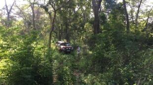 Dans la réserve naturelle de Gilé, la végétation est si dense, que la voiture peine à se frayer un passage à travers les lianes et les branchages...