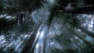 La deforestación tiende a disminuir pero no en todas partes del planeta.