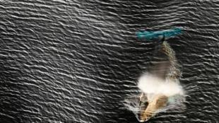 En el mar de Ross también viven las ballenas Minke.