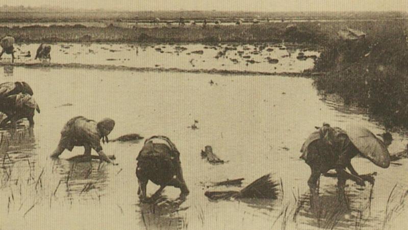 Nông dân Đông Dương làm ruộng tại vùng Camargue, Pháp.