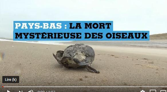 海鸠尸体被海浪冲上荷兰沙滩