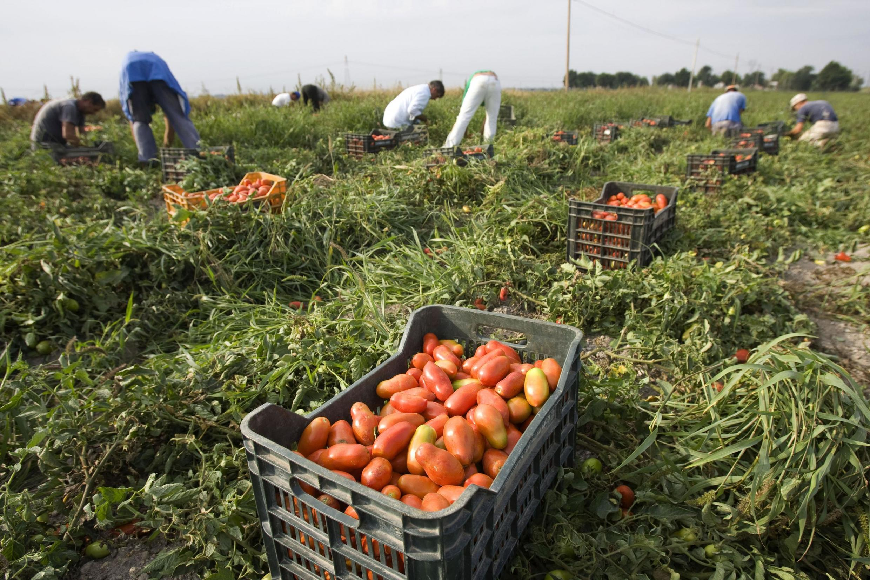 Metade da produção agrícola italiana depende de mão de obra estrangeira
